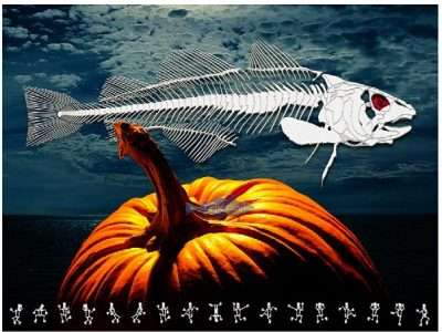 cod fish skeleton over a pumpkin